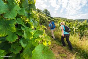 Weinwanderung mit Verkostung
